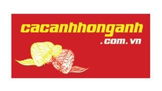 Thiết kế web Cá Cảnh Hồng Anh