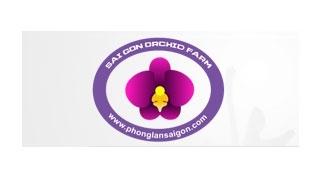 Thiết kế web phong lan Sài Gòn